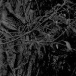crop-137-211-156-240-0-modzelewski-rosja-okladka-szkice-tom6.jpg